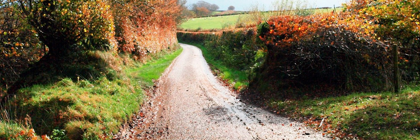 The Year of the Hedgerow - Celebrating Somerset's Hedges