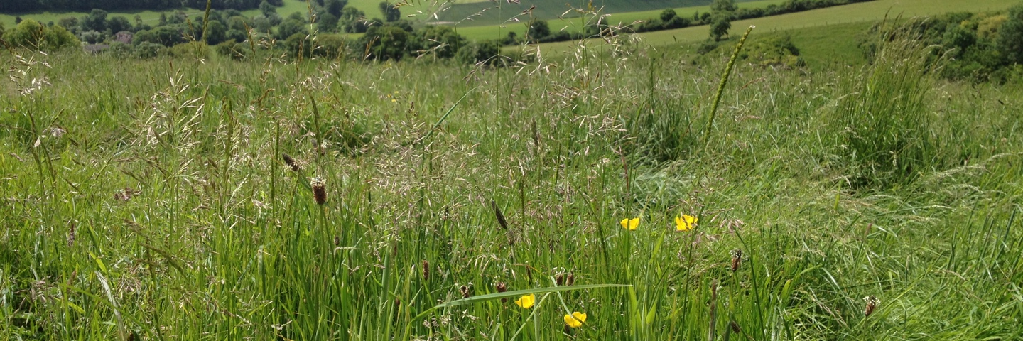 [10.05.18] Countryside Stewardship Payment Claim Deadline has been Extended to 15th June (from 15th May)
