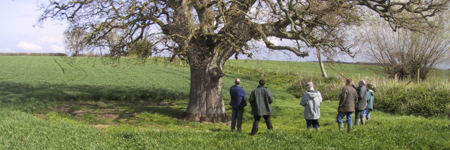 Celebrating Cornwall's Ancient Trees Every Month