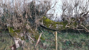Ancient Hedge Relics